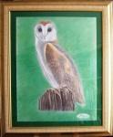 barn-owl-9