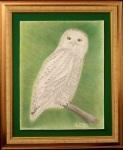 snowy-owl-004